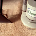 The Carpet Beetle – A Small Insect that Causes a Big Problem